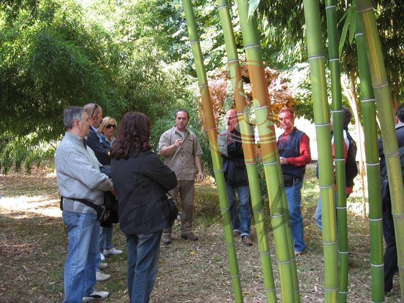 Vendita piante bambu coltivare canne di bambu piante da - Canne bambu in vaso ...