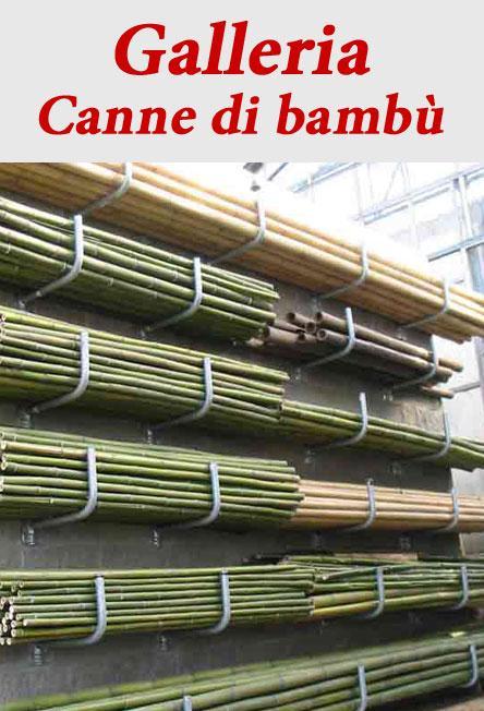 Canne di Bambù  VivaiBambù